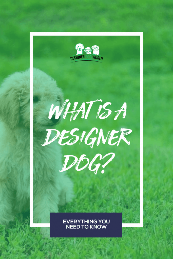 What is a Designer Dog? Everything You Need to Know