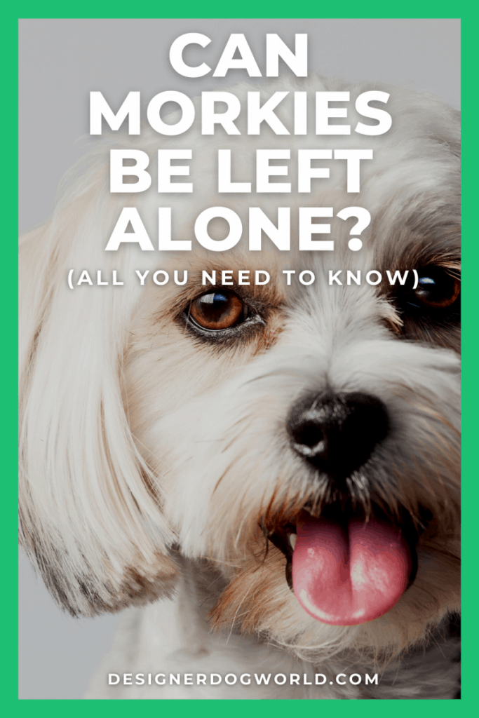 morkie left alone pin