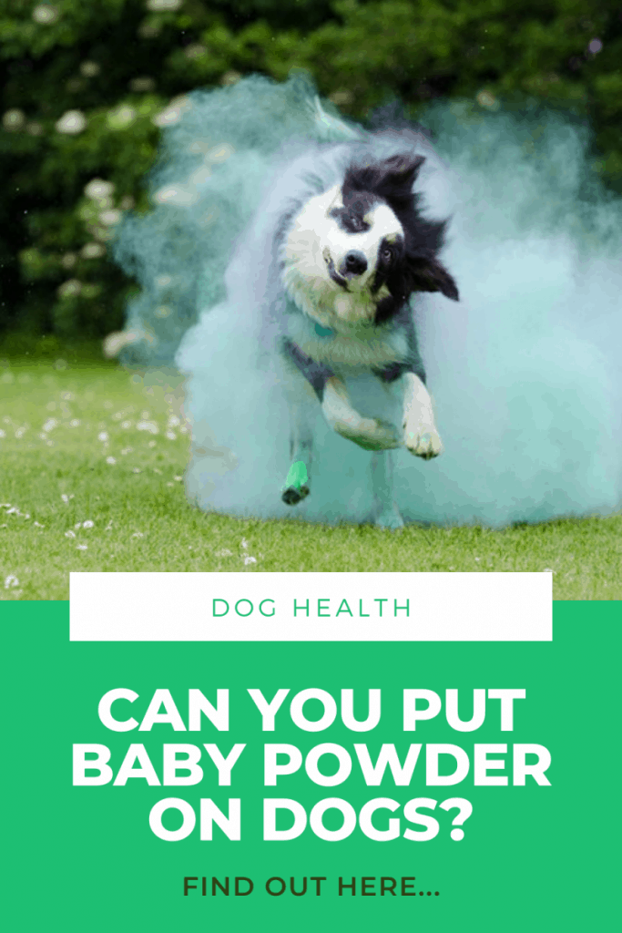 Can You Put Baby Powder on Dogs?  Yes. But Know this FIRST