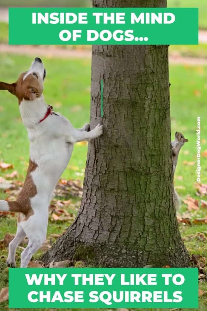 Inside the Mind of Dogs-Why They Like to Chase Squirrels