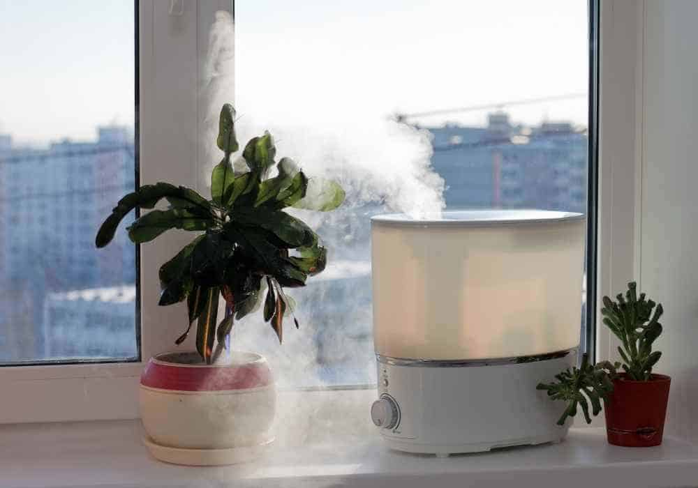 are humidifiers safe for dogs