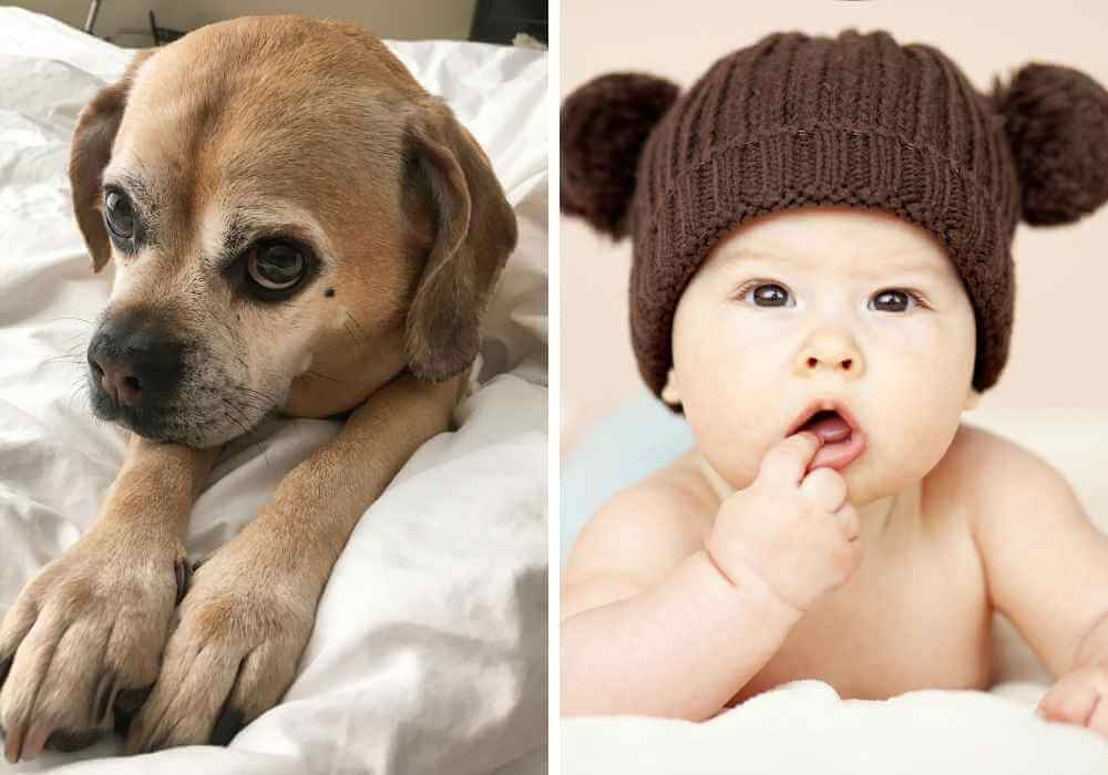 a puggle and a baby next to each other
