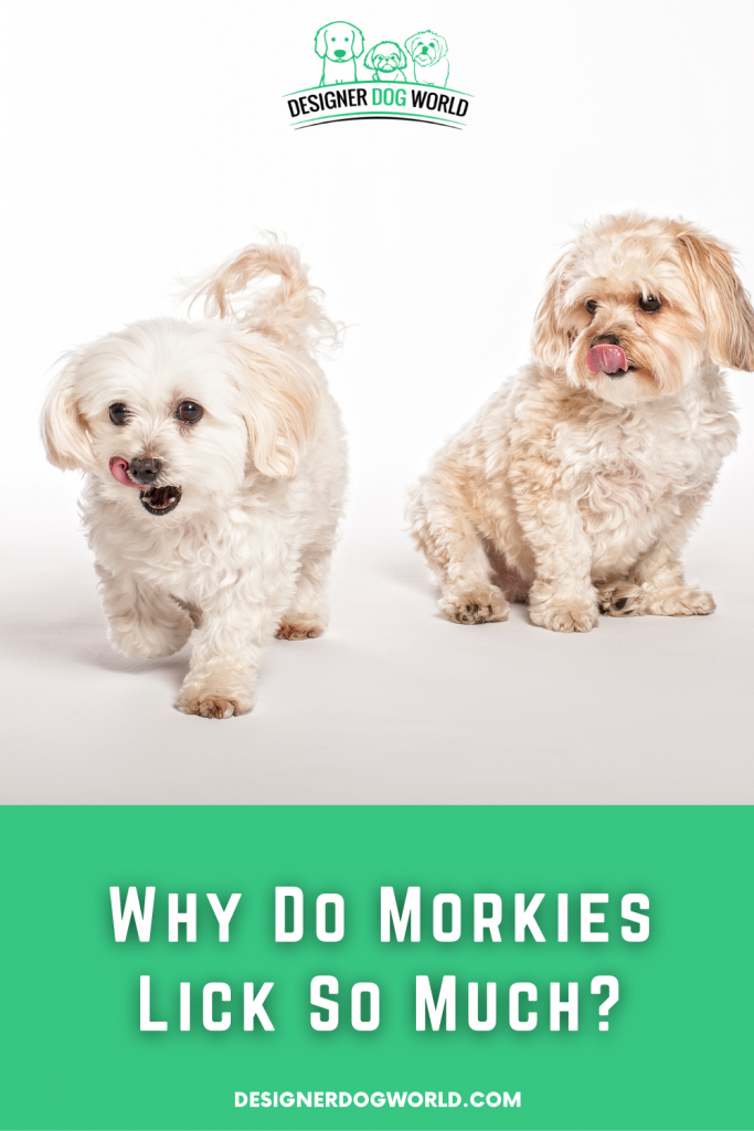 why do morkies lick so much pin