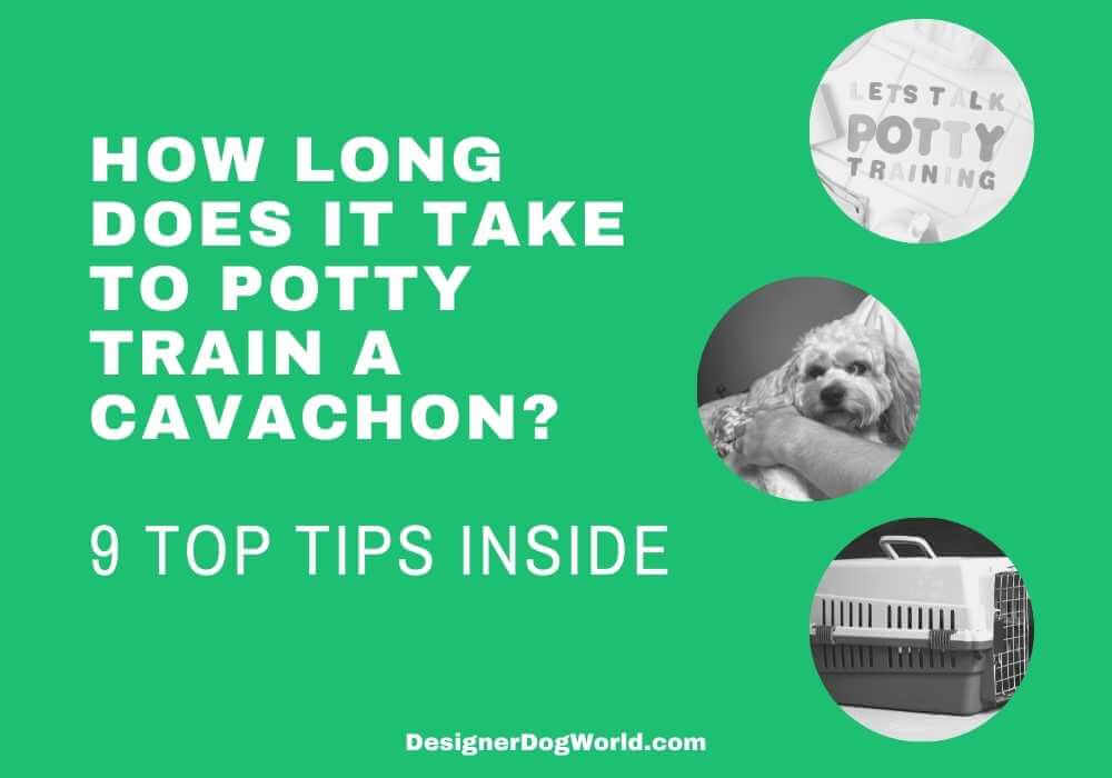 How long does it take to potty train a cavachon