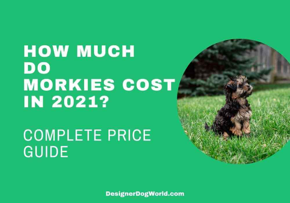 How Much do morkies cost in 2021