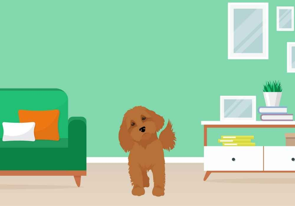 Are Cavapoos Good for Apartments