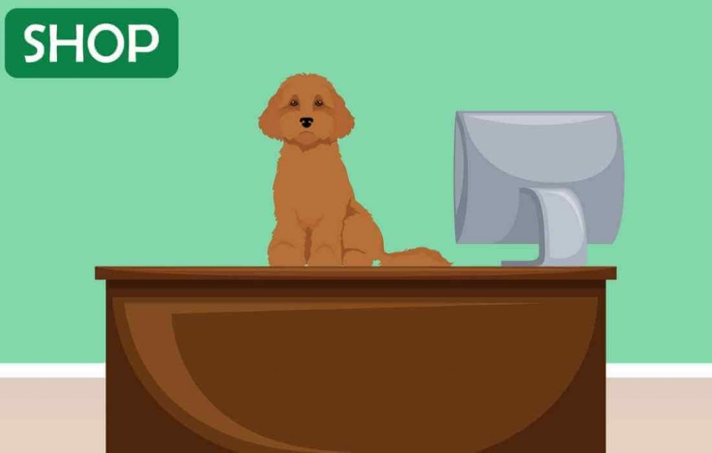How much do Cavapoos cost